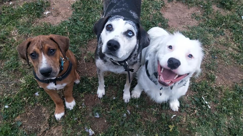 Shiro feliz con sus amigos