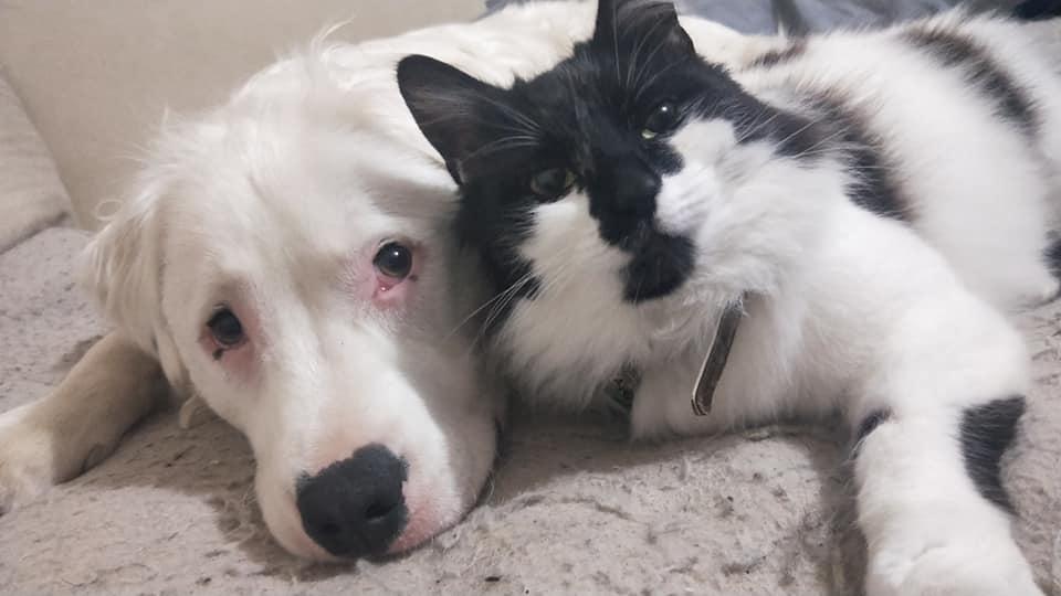 Shiro y su amigo gato