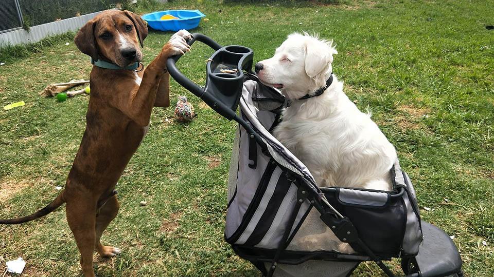 Shiro y su amigo