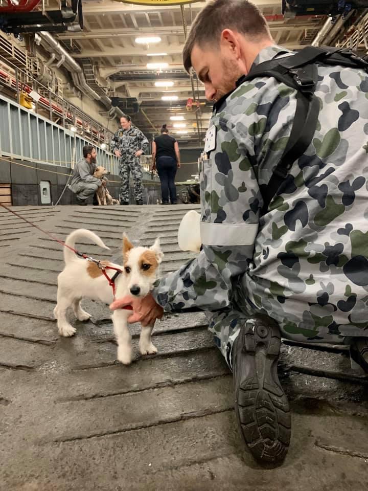 Soldado y un perrito