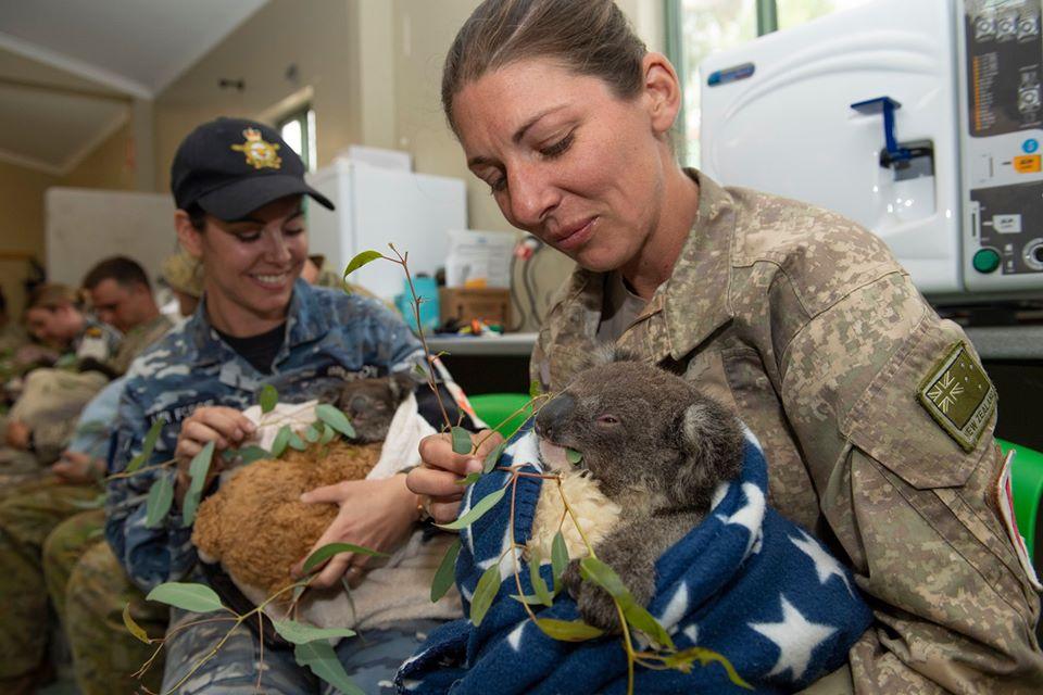 Soldados ayudan a koalas