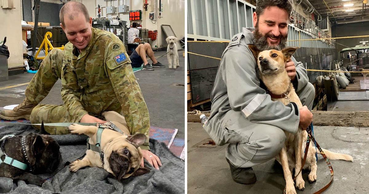 Soldados brindan refugio a 135 perros en el buque de la marina