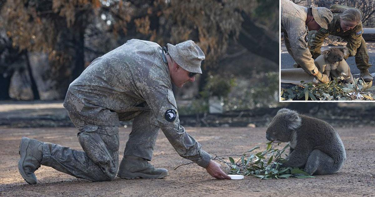 Soldados del ejercito de Nueva Zelanda rescatan a koala angustiado en el monte
