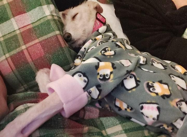 Tiggy durmiendo comoda