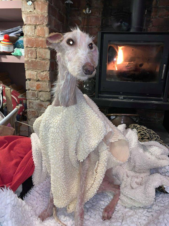 Perro abandonado llevado a refugio