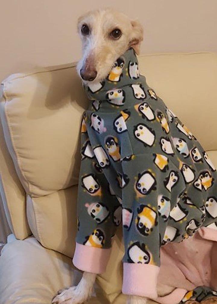Perro abandonado recuperada con abrigo