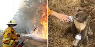 Veterinarios sacrifican animales afectados por incendios en Australia
