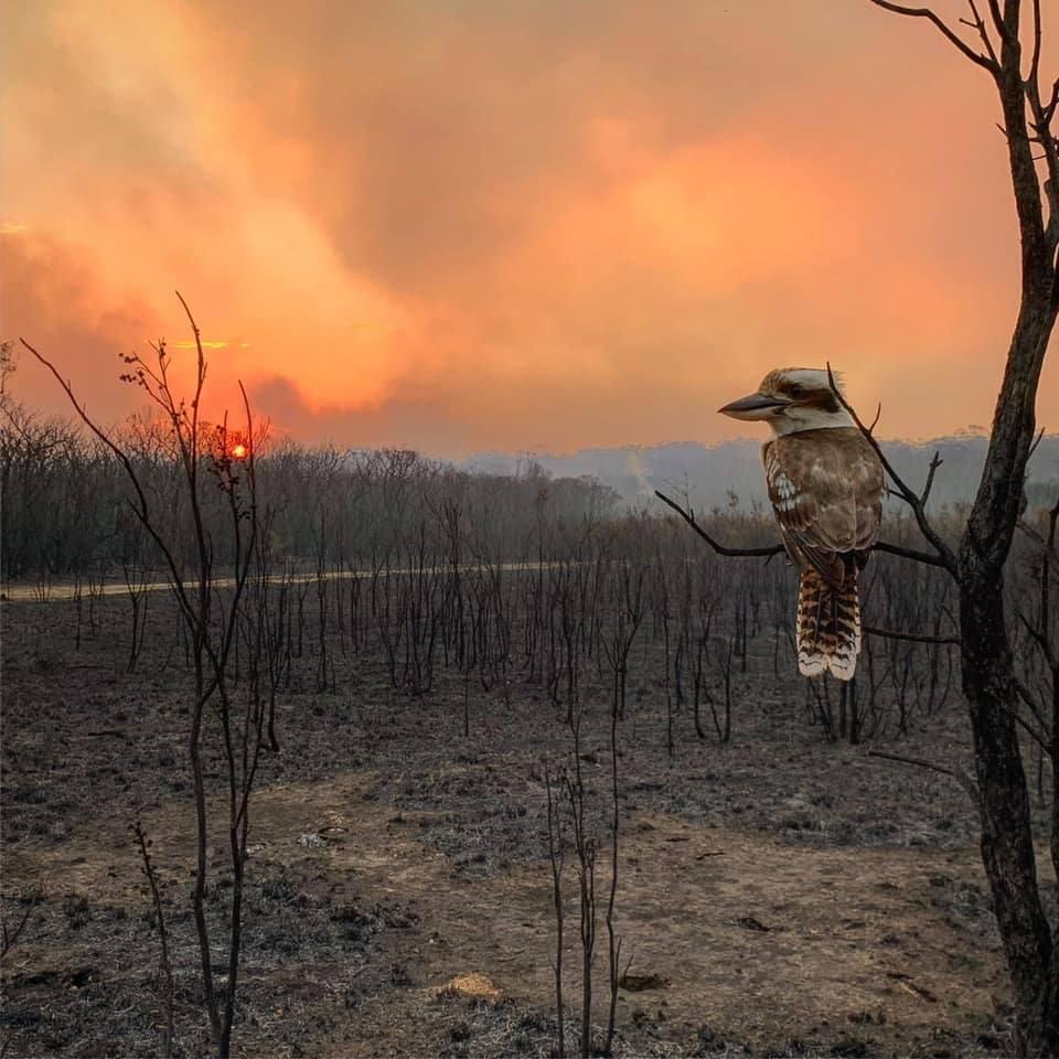 Pájaro, zona afectada