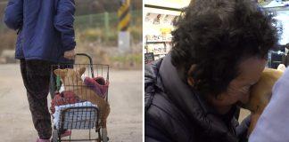Abuela adopta a un perro paralizado que nadie más quiere
