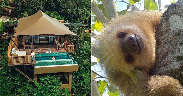 Ahora puedes quedarte con los perezosos en la selva costarricense
