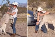 Burro adoptado actúa como un perro cuando ve que su papá está en casa