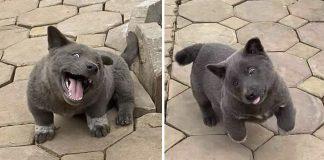 Cachorro con apariencia de gato confunde a la gente
