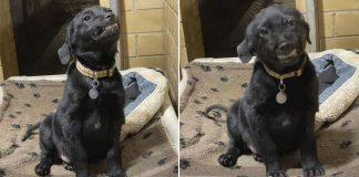 Cachorro se sienta en el refugio sonriendo a todos los que pasan
