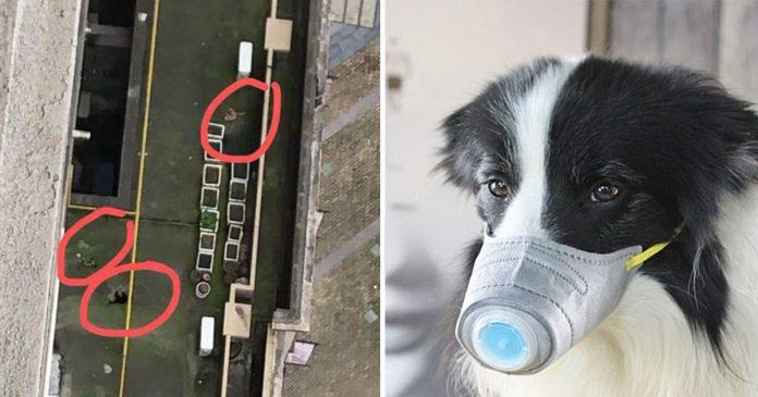 China ordena a los ciudadanos a que se deshagan de sus animales por miedo al coronavirus
