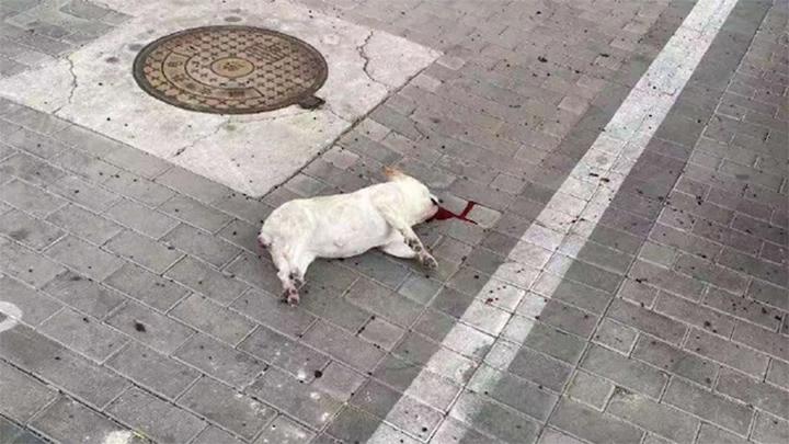 China ordena deshacerse de mascotas por temor
