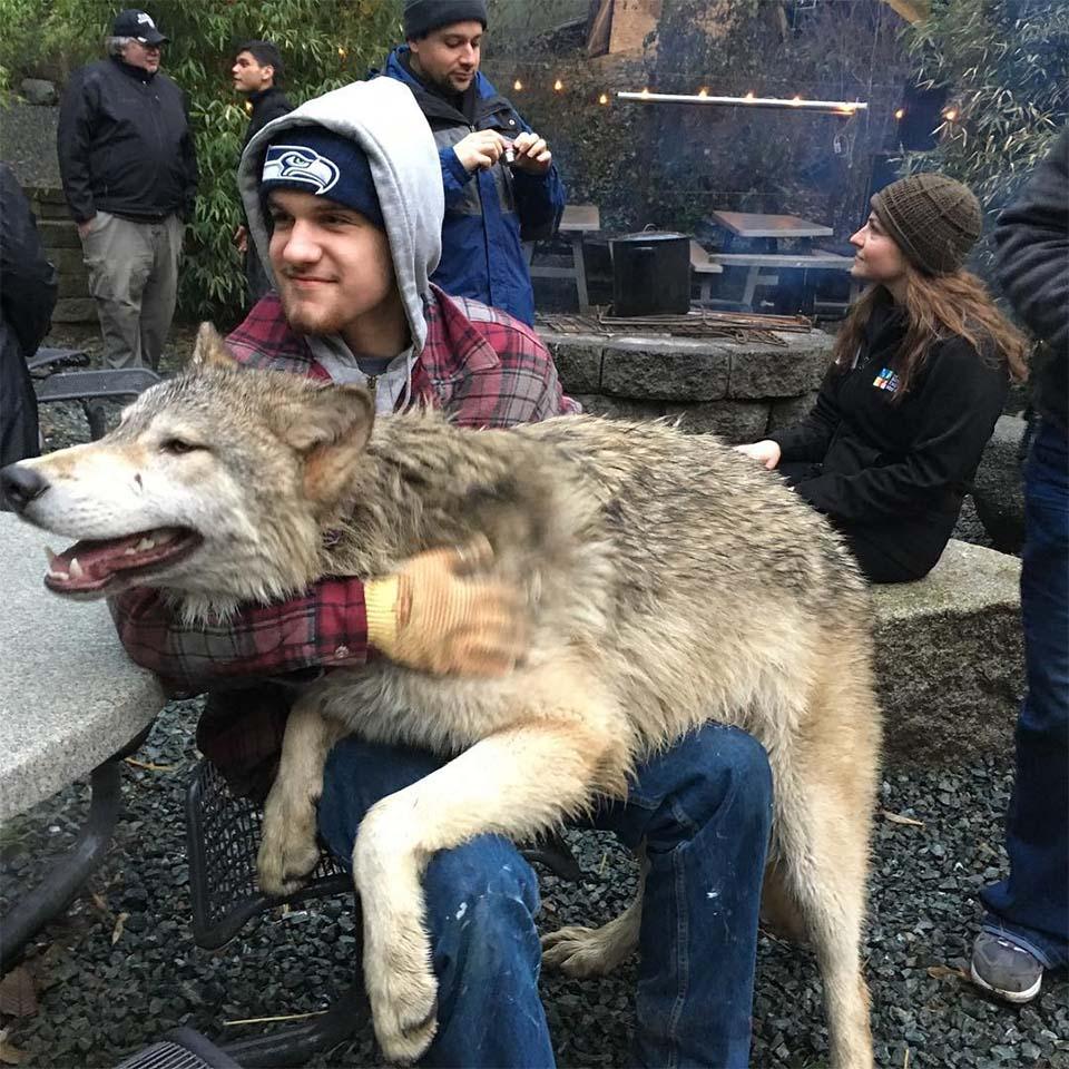 Experiencia con lobos