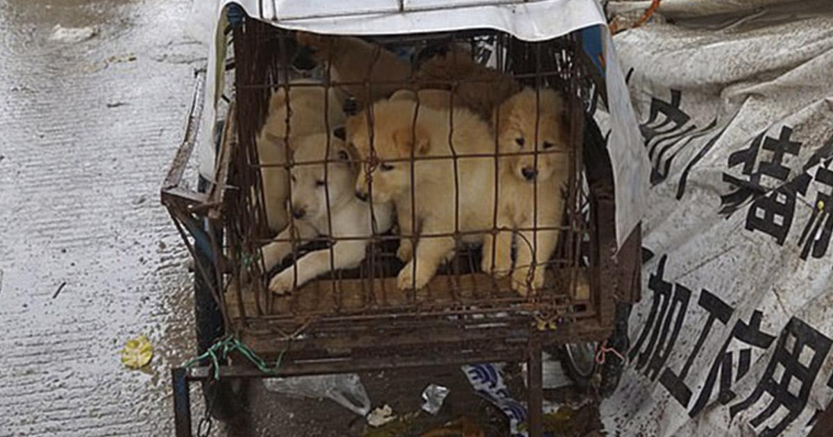 Funcionarios de ciudad china proponen prohibir comer carne de perro