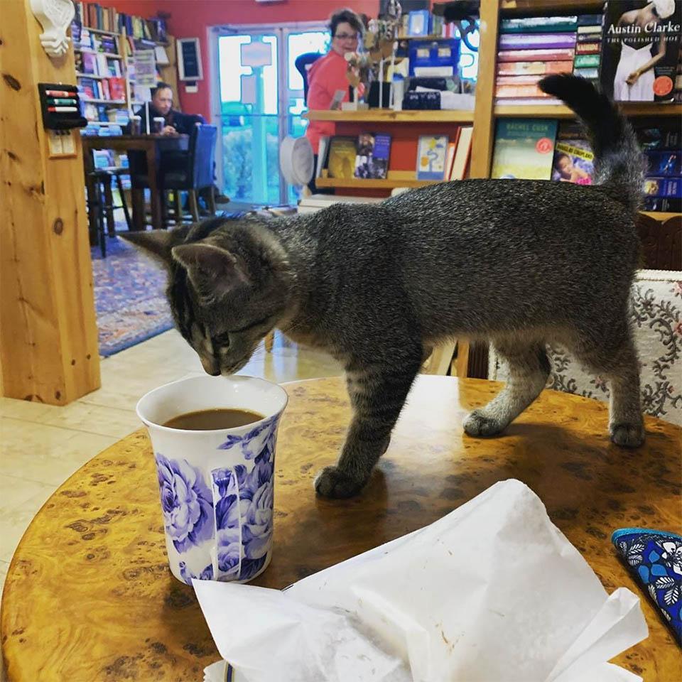 Gatito en librería