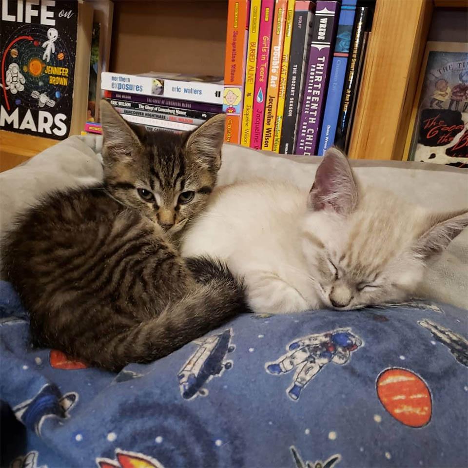Gatitos deambulan en librería