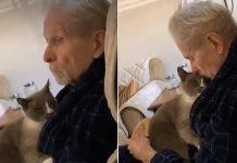 Gato amable pasa todo el día consolando a su padre con Alzheimer