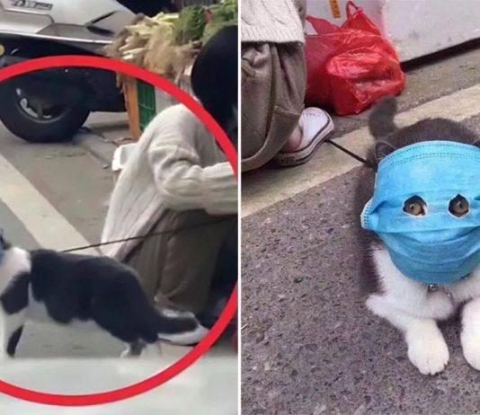 Gato con máscara humana con agujeros en los ojos para protegerlo del coronavirus