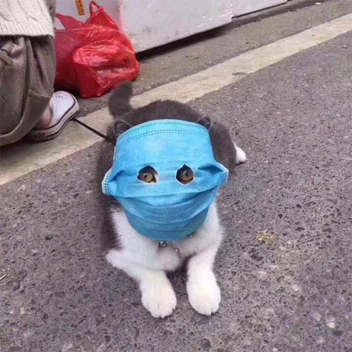 Gato con máscara