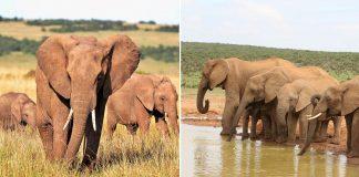 Gobierno de Botsuana subasta permisos para cazar elefantes