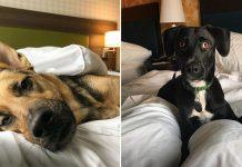 Hotel permite a los huéspedes compartir con perros durante su estadía