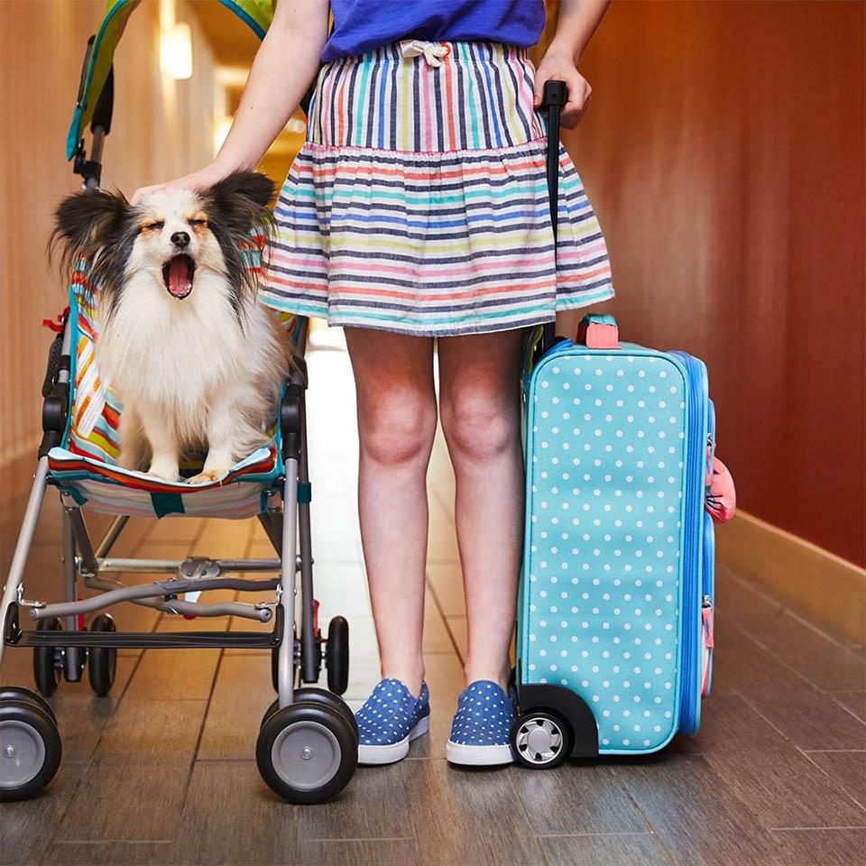 Huéspedes y mascotas del hotel