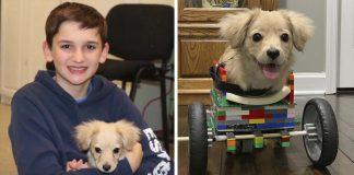 Joven crea silla de ruedas con piezas de Lego para perrita sin patas