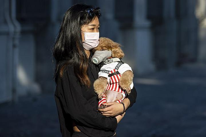 Ley prohíbe consumo de carne de perro