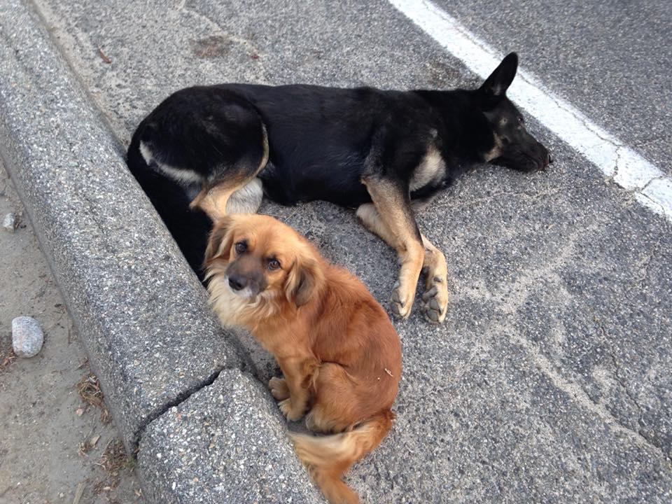 Marley y Murphy perrito protege a su amiga