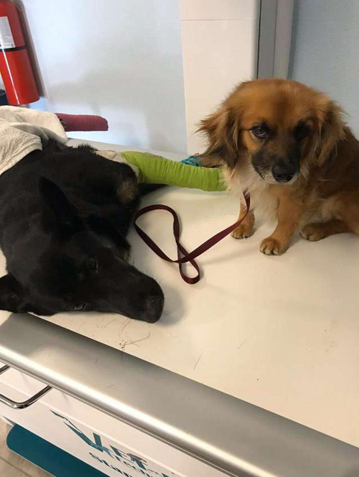 Marley y murphy veterinario