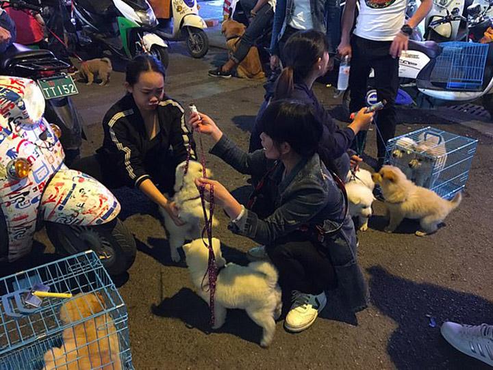 Medidas extremas con mascotas