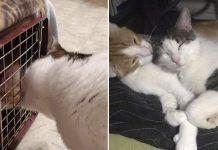 Mujer descubre que su gato tenía un mejor amigo y decide adoptarlo
