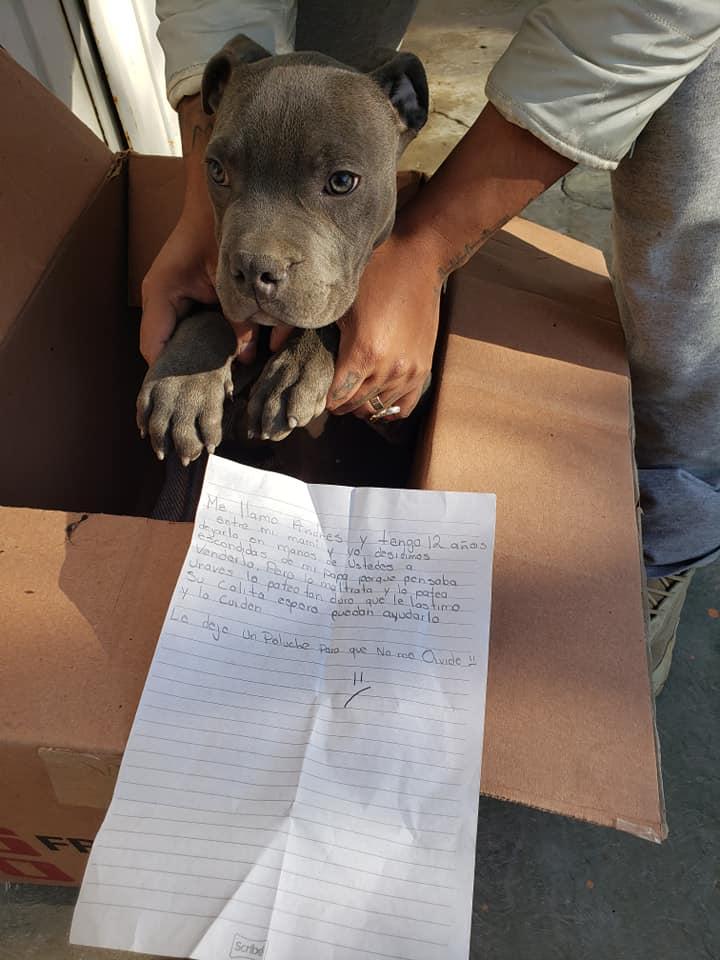 Niño abandonó su cachorro en un refugio