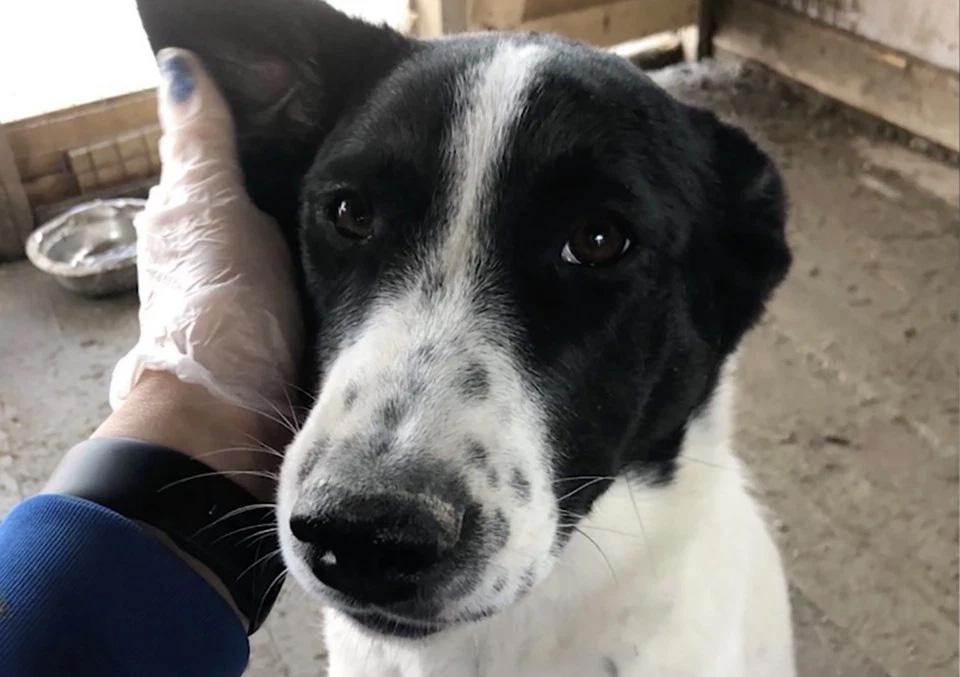 Pareja adopta perro y lo asesina