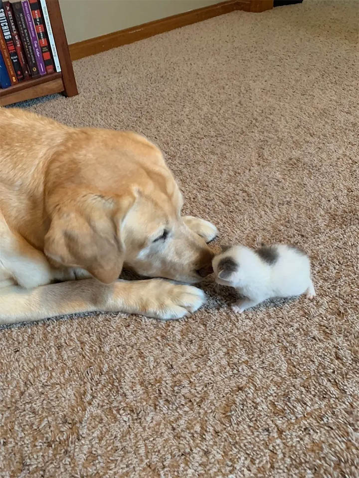 Paxton con su gata