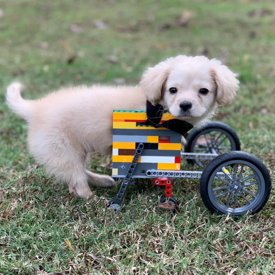 Perrita con ingeniosa silla de ruedas