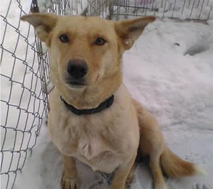 Perrita es encontrada en la nieve con sus cachorros