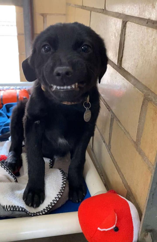 Perrito con gran sonrisa
