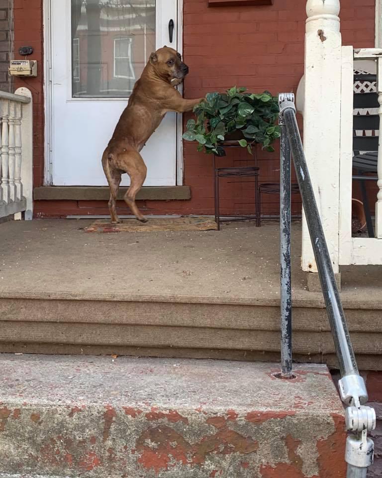 Perro abandonado tocando la puerta