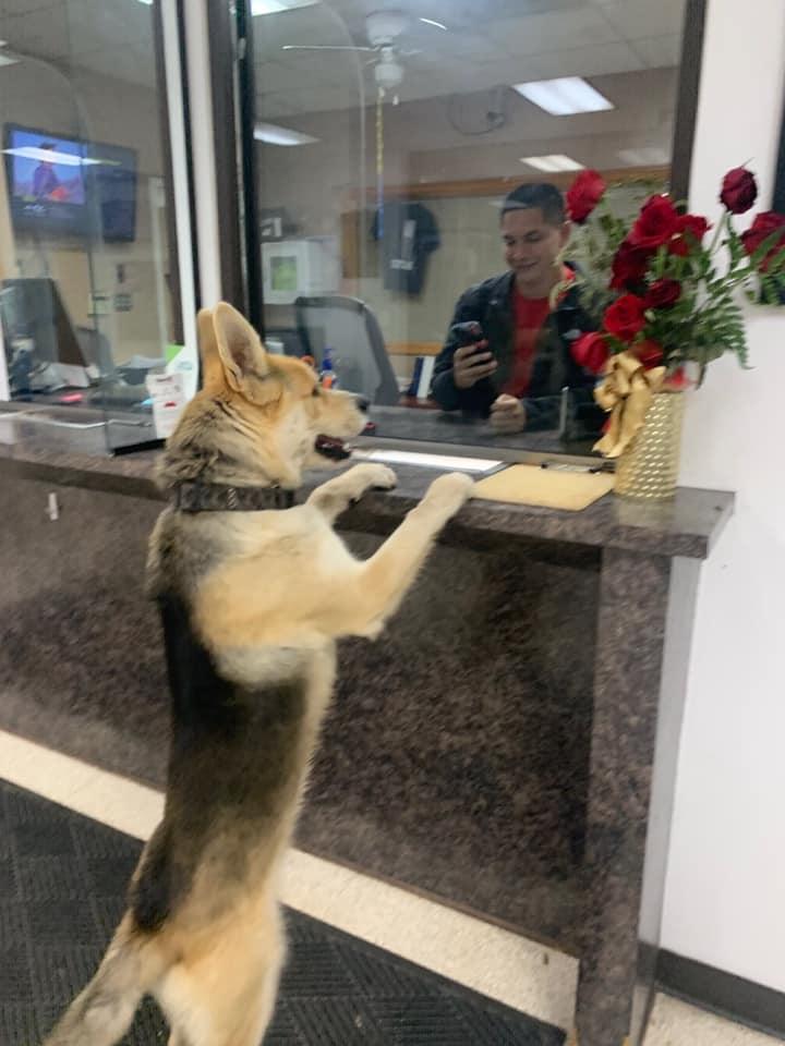 Perro entra en la estación de policia