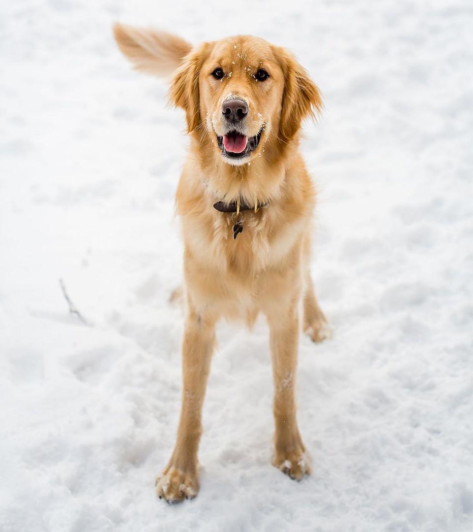 Perro espera pacientemente a cartero