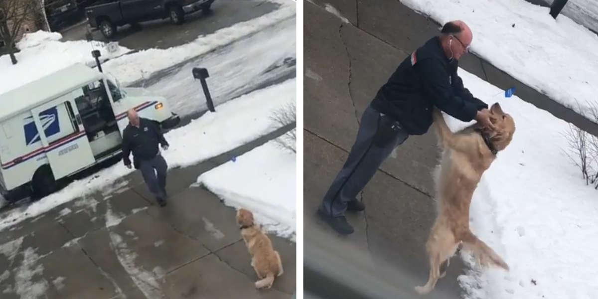 Perro espera para abrazar a su cartero favorito todos los días