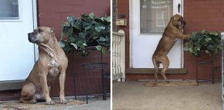 Perro esperó fuera de casa durante semanas a que su familia volviera