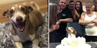 Perro está tan feliz de que se acordaran de su cumpleaños