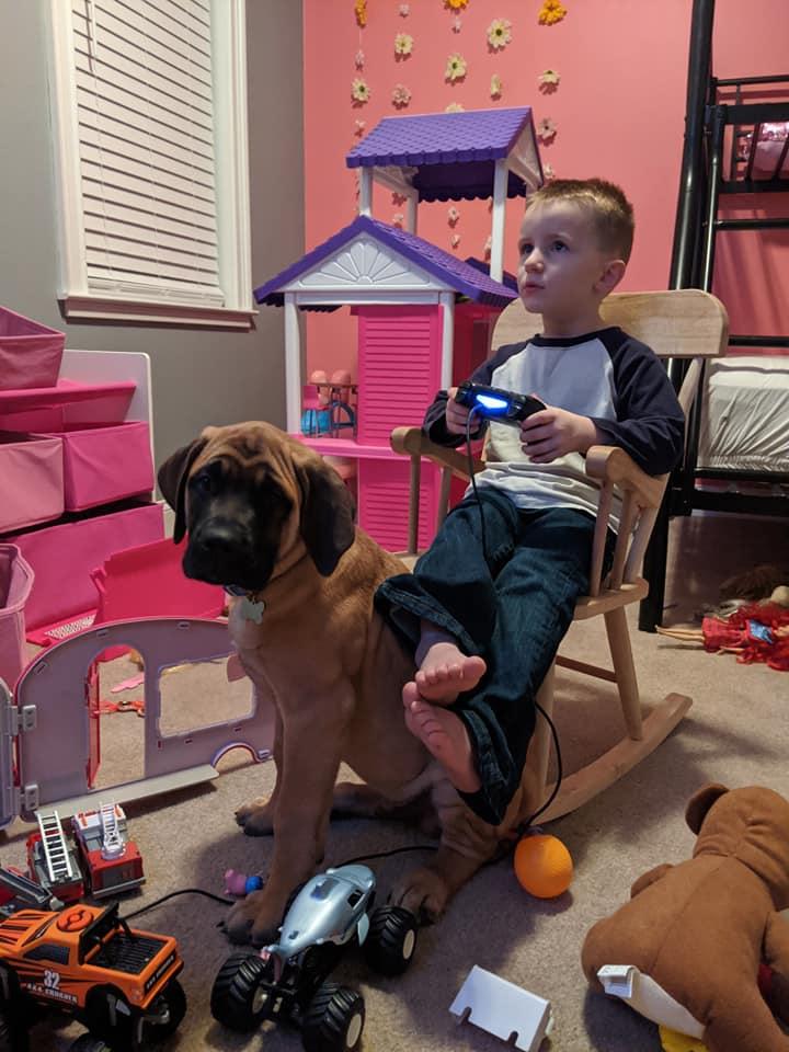 Perro leal acompaña a niño