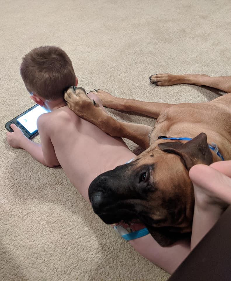 Perro leal hace compañía
