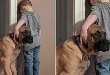 Perro leal que hace compañía a un niño durante el tiempo de espera